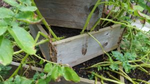 Holzkisten im Garten
